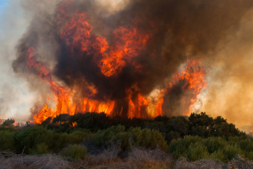 Fire & Fynbos